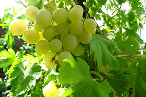 Piante frutto vivai michelinivivai michelini for Piante da frutto nord italia