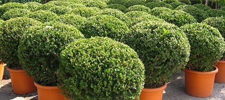 Alberi Arbusti e Piante Mediterranee