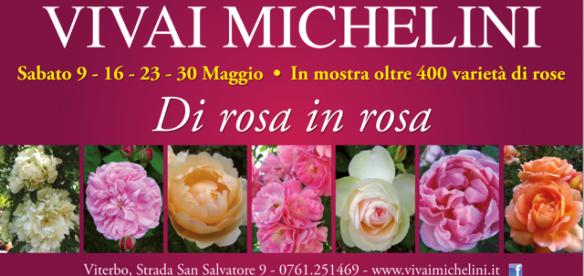 michelini-di-rosa-in-rosa