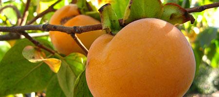 Piante Fruttifere e Forestali