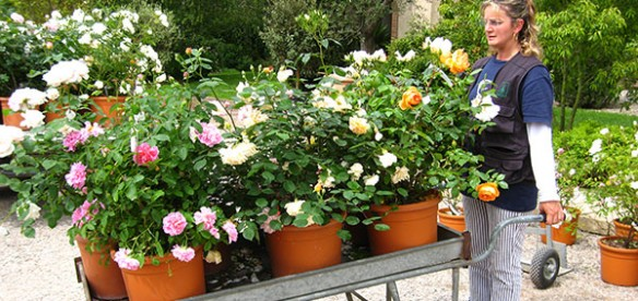 WEEKEND TRA LE ROSE IN FIORE 2012