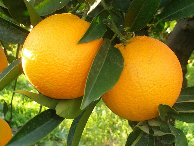 Home vivai michelinivivai michelini a viterbo dal 1959 for Vivai piante da frutto