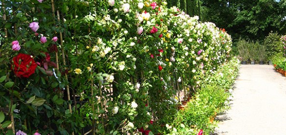 WEEK-END TRA LE ROSE IN FIORE 2014